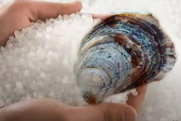 Jovem cientista identifica primeira ocorrência de ingestão de microplásticos por ostra no Maranhão